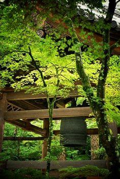 金閣寺:新緑と鐘楼