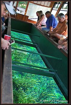 Ocala (Florida) Photos: Taking a tour in a Glass Bottom Boat is must if you visit  Silver Springs Park in Ocala