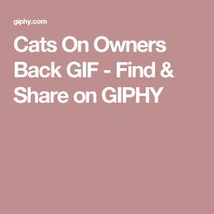Cats On Owners Back GIF - Find & Share on GIPHY