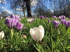 Hyde Park London #SummerIsComing #Flowers #Blooming