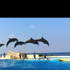 Aquarium in Okinawa, Japan. Ocean Expo Park, I've been here!