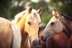 Horses use facial expressions to communicate  Like humans, horses use facial expressions to communicate with each other. They move the muscles around the nostrils, lips and eyes to create different expressions that help them, in a way, talk to each other. As of now, 17 different horse expressions have been identifie