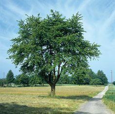 bomen staan ook in mijn dierentuin omdat het bij de natuur en de dieren hoort