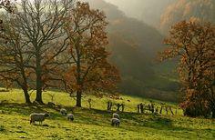Goathland, England, UK