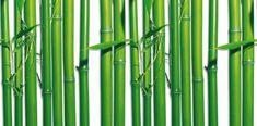 Sarja: Wall Mural - Bamboo 4-osaa Tuotenumero: 00421 Idealdecor valokuvatapetti, 4-osainen, 183 x 254 cm