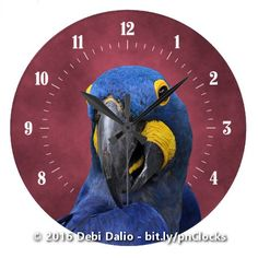 This colorful wall clock features a face-on close-up portrait of a cheeky but adorable hyacinth macaw with its distinctive blue feathers and yellow facial markings in front of a white numeric dial on top of a smoky red background. http://www.zazzle.com/cute_hyacinth_macaw_close_up_large_clock-256672029832541837?rf=238083504576446517&tc=20161111_pint_NSoZ #animals #birds #photography #Zazzle #StudioDalio