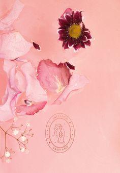 New in Portfolio: Sweet Mūn - Cocorrina
