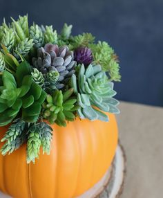 Make a gorgeous pumpkin succulent planter for your fall table. This easy DIY version uses realistic looking faux plants and a faux pumpkin so it will last for years! Diy Pumpkin, Pumpkin Planter, Pumpkin Crafts, Faux Succulents, Faux Plants, Faux Pumpkins, Easy Fall Crafts, Fall Planters, Fall Table