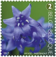 Tepal of Common Bluebell