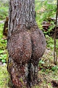 """Tony, I can't believe you post all these cutesy animal pics!'. Umm, yeah I do, cause a tree scrotum makes all that crap worth it. Bam!"