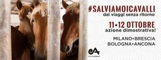 L'11 E 12 OTTOBRE 2014, IN DIVERSE CITTA' ITALIANE, DALLE 16.00 ALLE 19.00, SI TERRANNO AZIONI DIMOSTRATIVE DI DENUNCIA E PROTESTA ORGANIZZATE DA ESSEREANIMALI SU ALLEVAMENTO, SFRUTTAMENTO, MALTRATTAMENTO, UCCISIONE E CONSUMO DI CARNE EQUINA. http://goodbearblind.blogspot.it/2014/10/salviamoicavalli-dai-viaggisenzaritorno.html