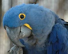 Birds are the most beautiful creation of the world. These are found in the category of animals, but unlike mammals, these are winged and two legged animals and like mammals, these have a different …