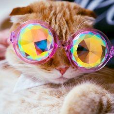 Meet Shrampton: The Cutest Cat On The Internet #refinery29  http://www.refinery29.com/shrampton-cat-instagram#slide12  Hold me closer, tiny Shramper.