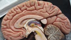 Brains of People With Schizophrenia Try to Repair Themselves: Study #iNewsPhoto
