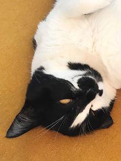寝てばっかり | うちの猫がまた変なことしてる。【猫まんが】