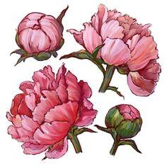 Watercolor Projects, Watercolor Cards, Watercolor Flowers, Watercolor Paintings, Peony Painting, Flower Drawing Tutorials, Art Tutorials, Peony Illustration, Ukulele Art