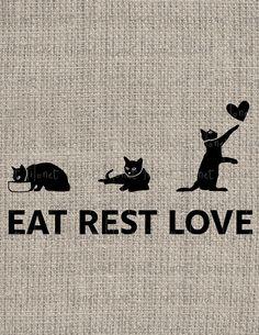 The cat ....