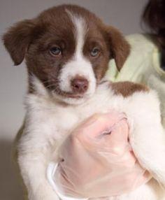 里親さんブログ犬ー122  ビーン(ココア) 【近況報告】 - http://iyaiya.jp/cat/archives/73084
