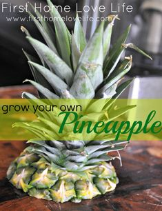 This really works! How To: Grow Your Own Pineapple. Kris and I did this last year, and now that we live apart I want my own! We were both skeptical it would work, but it was really easy! Vegetable Garden, Garden Plants, Indoor Plants, Permaculture, Container Gardening, Gardening Tips, Grow Your Own, Dream Garden, Lawn And Garden