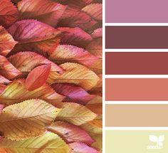 paletas de cores inspiradas em fotografias tiradas da natureza;