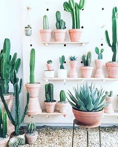 Down Stairs living room cactus heaven at @kaktus_kbh by chromecactus