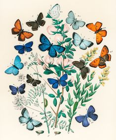 Illustrations from the book European Butterflies and Moths by William Forsell Kirby (1882), a kaleidoscope of fluttering butterflies and caterpillars. Digitally enhanced from our own original plate. | free image by rawpixel.com Butterfly Illustration, Butterfly Drawing, Butterfly Wall Art, Vintage Butterfly, Butterfly Bedroom, Butterfly Live, Rose Bedroom, Butterfly Images, Butterfly Design
