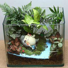 Terrariums Diy, Terrarium Plants, Succulent Terrarium, Succulents Garden, Garden Plants, Suculentas Diy, Cactus Y Suculentas, Aquascaping, Miniature Fairy Gardens