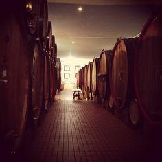 I Montalcino produceras det berömda vinet Brunello di Montalcino. Vinet får inte säljas innan det är fem år gammalt. Ofta lagras det 2-3 år på stora ekfat och resten av tiden på flaska. #thewineryhotel #thewinery #coldorcia #brunello #brunellodimontalcino Tuscany Vineyard, Brunello Di Montalcino, Caves, First World, Hospitality, Red Wine, Rest, Around The Worlds, Instagram