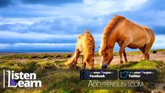 Horse Idioms English Lesson Cover Image Types Of Horses, Types Of Animals, English Idioms, English Lessons, High Horse, Improve Your English, Bbc Radio, English Language, Cover