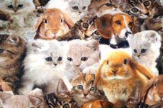 Stenzo15 7623 Tricot digitaal huisdieren