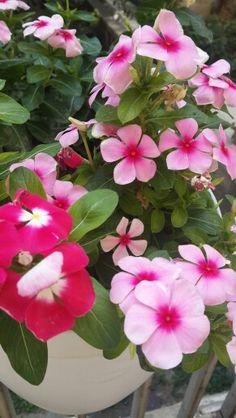 گلهای پاییزی