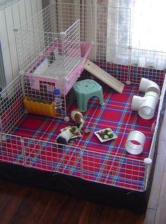 Pic-nic rug flooring - Guinea Pig Cage Photos