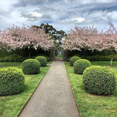 Stonefields, design : Paul Bangay. Buxus + Malus Floribunda.