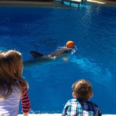 Dolphins at play in Siegfrid & Roy's sanctuary