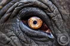 Image result for elephant eye close up