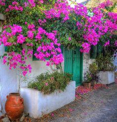 Nadia's House by kyrenian Fachada Colonial, Casa Top, Garden Windows, Exterior, Bougainvillea, House Entrance, My Dream Home, Garden Plants, Outdoor Gardens