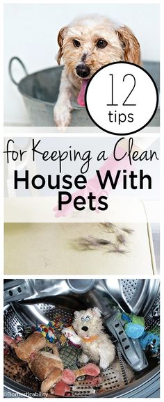 Great tips for pet owners! 12 Tips for Keeping a Clean House With Pets