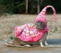 Please. If you must own a rat, don't make it worse by KNITTING A PINK DRESS AND PIXIE HAT FOR IT.
