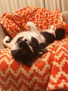 変わらないところ | うちの猫がまた変なことしてる。【猫まんが】