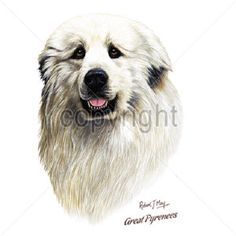Great Pyrenees...... T shirt..Women's Cut..SM-3XL..many colors by GreyDogFarm on Etsy https://www.etsy.com/listing/234641665/great-pyrenees-t-shirtwomens-cutsm