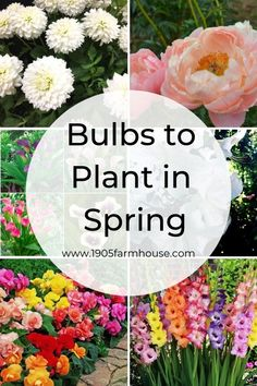 How do you know what type of bulbs to plant in the Spring for Summer blooms? Read all about the multiple types of bulbs, their flowers and ideal growing conditions