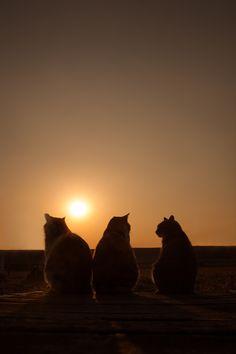 Very unusual cat photo by Seiji Mamiya. Glad to see that kitties enjoy sunsets too.