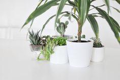 Was sind die besten Zimmerpflanzen für die Wohnung? Ich verrate euch meine zehn schönsten Pflanzen für die Wohnung und gebe euch ein paar Tipps zur Pflege.