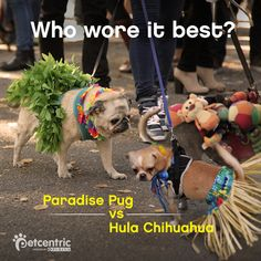 Which pup do you think wore it best at the Beggin' Halloween Dog Parade?