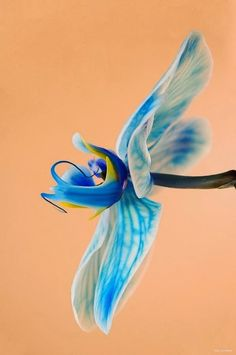 Blue Orchid ☮ღツ