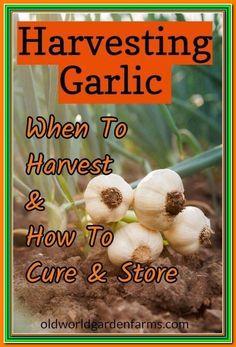 Vegetable Garden Planner, Veg Garden, Garden Pests, Vegetable Gardening, Garden Insects, Veggie Gardens, Flower Gardening, Edible Garden, Garden Tips