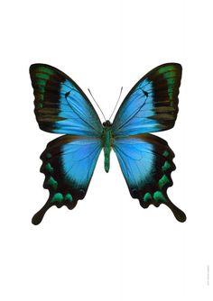 Butterfly on pinterest