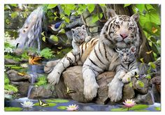 [ Wooden Framed or not ] [ New Release ] Diy Oil Painting by Numbers, Paint by Number Kits - White Tiger and Her Kids inches - Digital Oil Painting Canvas Wall Art Artwork Landscape Paintings for Home Living Room Office Picture Decor Decorations Gift Tiger Painting, Diy Painting, Tiger Pictures, Animal Pictures, Wall Pictures, Tiger Images, Image Tigre, Tigre Animal, White Tiger Cubs