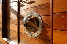 Dog portholes all along the wooden fence