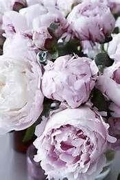 Purple Peonies - Bing images